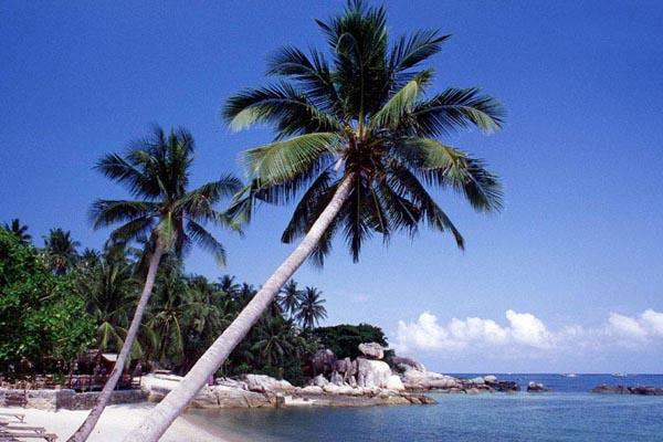 เกาะนางยวน เกาะเต่า ดำน้ำ
